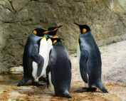 What does Google's Penguin 4.0 Algorithm Update Mean for You?